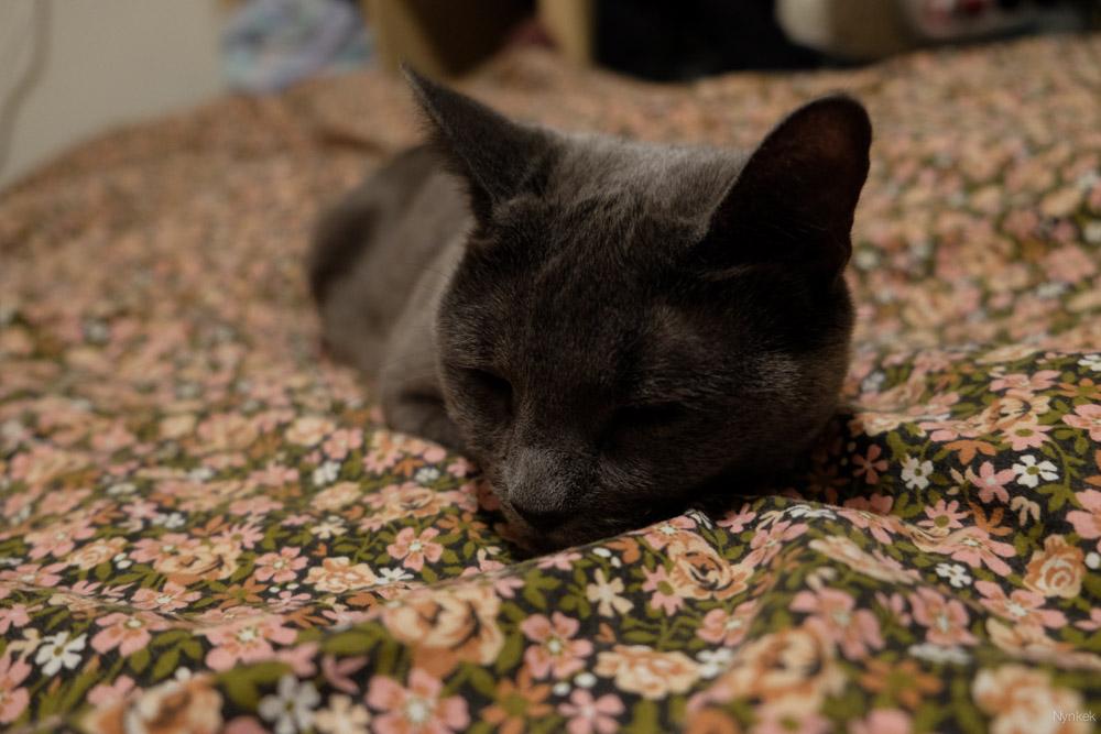 De dag dat we haar leerde kennen. Ze lag lekker te slapen op Annes bed.