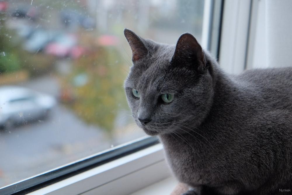 Een van haar favoriete plekken bij het raam. Hele raam heeft nu neusjes-afdrukken.