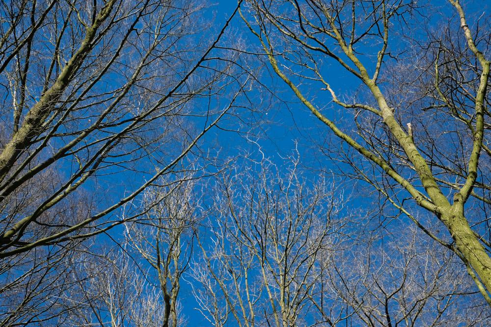 Het was een heerlijke dag! Ik vind de blauwe lucht met de takken zo mooi, zeker met de schaduw op de takken.